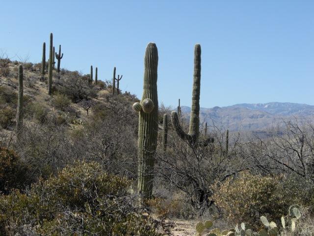 Cactus Porn