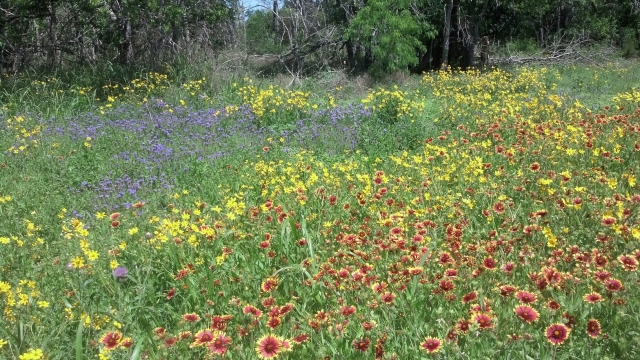 Rainbow Wildflowers